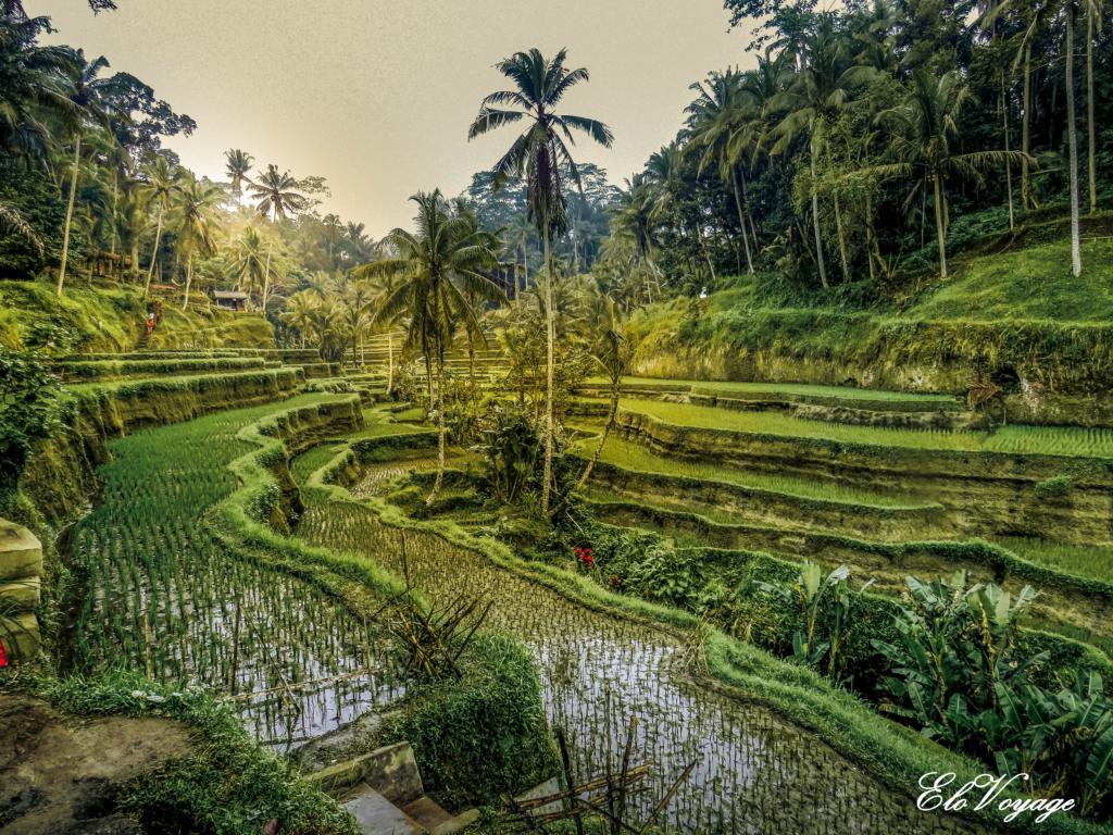 bali-ubud-rizieres-tegalalang