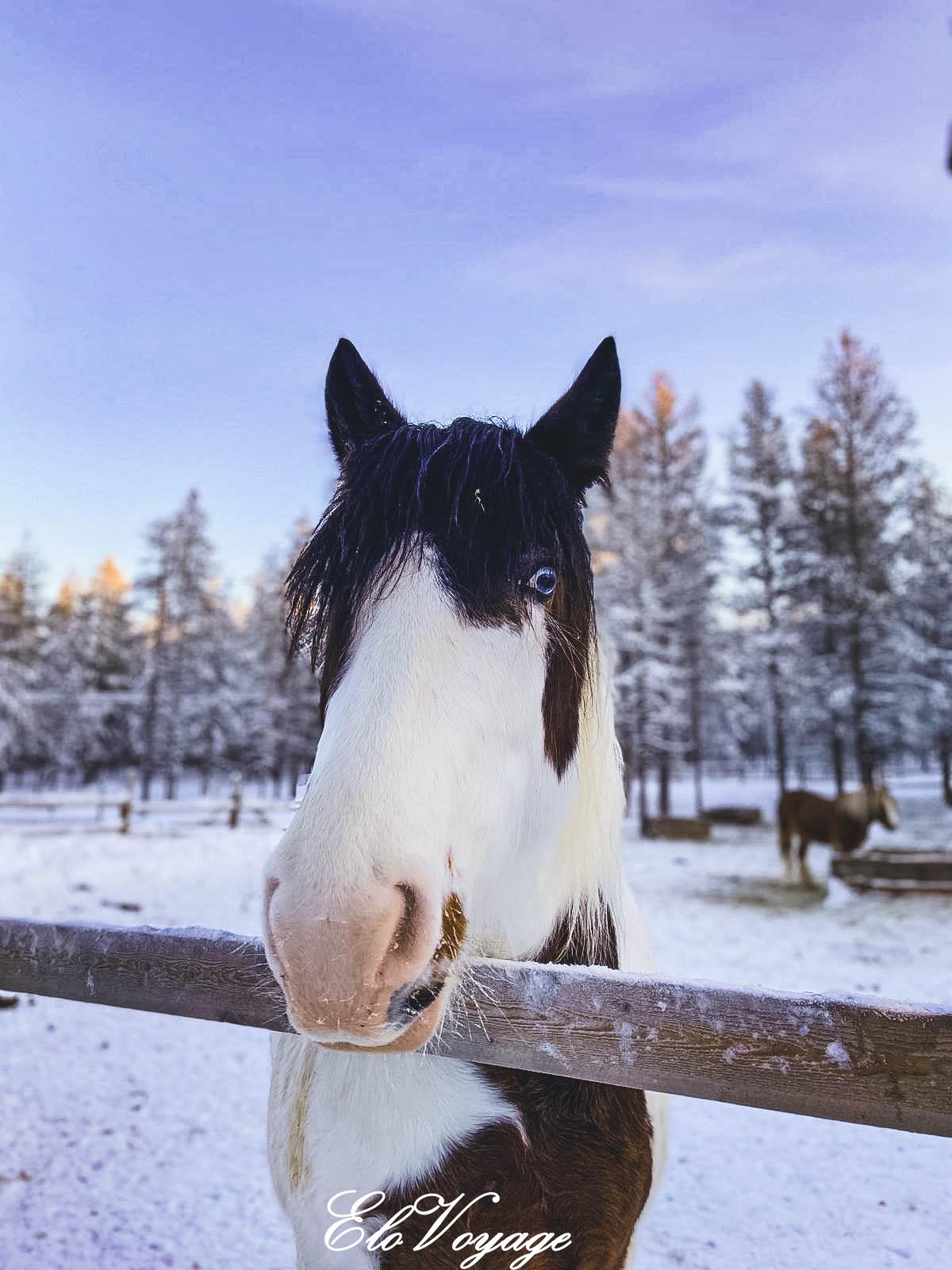 balade cheval laponie finlande