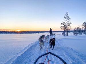 excursion laponie huskys chiens de traineau