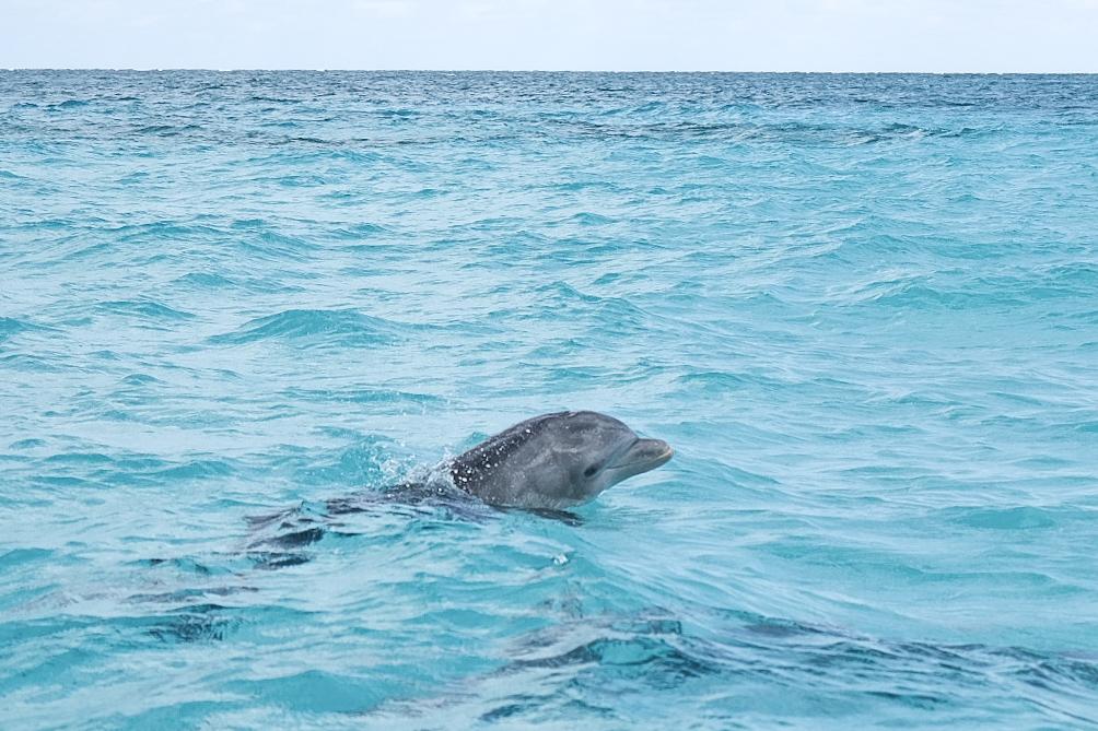 observation dauphins rio lagartos Yucatan Mexique